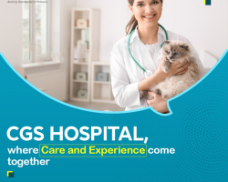 """""""Cats and Dogs"""" pet care center in Gurgaon"""